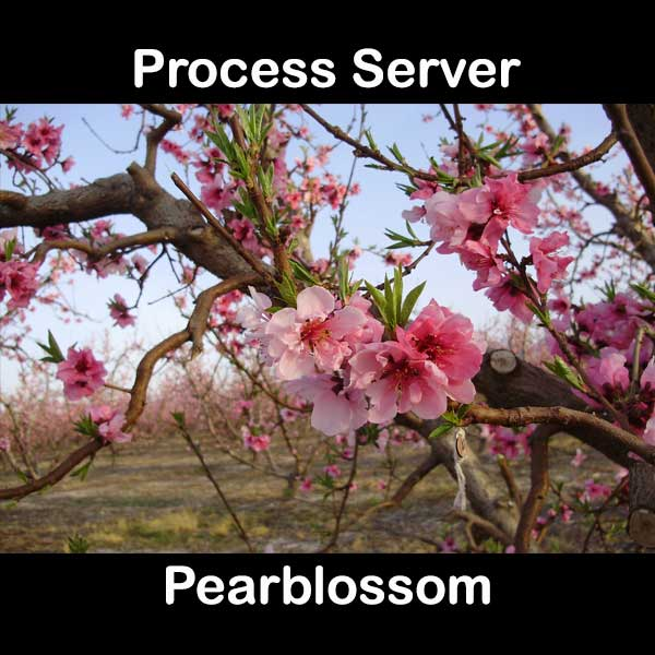 Process Server Pearblossom
